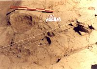 Cronica Cercetărilor Arheologice din România, Campania 2000. Raportul nr. 192, Stelnica, Grădiştea Mare<br /><a href='http://foto.cimec.ro/cronica/2000/192/STEL2.jpg' target=_blank>Priveşte aceeaşi imagine într-o fereastră nouă</a>