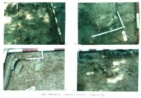 Chronicle of the Archaeological Excavations in Romania, 2001 Campaign. Report no. 26, Băneşti, Dealul Domnii<br /><a href='http://foto.cimec.ro/cronica/2001/026/Pl7.jpg' target=_blank>Display the same picture in a new window</a>