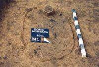Chronicle of the Archaeological Excavations in Romania, 2001 Campaign. Report no. 181, Roşia Montană, Cârnic (Piatra Corbului).<br /> Sector Imagini_detaliu_necropola.<br /><a href='http://foto.cimec.ro/cronica/2001/181/Imagini-detaliu-necropola/009.JPG' target=_blank>Display the same picture in a new window</a>