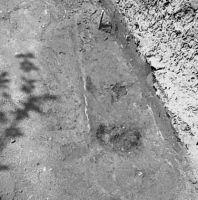 Cronica Cercetărilor Arheologice din România, Campania 2002. Raportul nr. 43, Caransebeş<br /><a href='http://foto.cimec.ro/cronica/2002/043/BSFig9.jpg' target=_blank>Priveşte aceeaşi imagine într-o fereastră nouă</a>