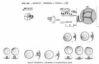 Chronicle of the Archaeological Excavations in Romania, 2002 Campaign. Report no. 72, Desa, La ruptură<br /><a href='http://foto.cimec.ro/cronica/2002/072/04.jpg' target=_blank>Display the same picture in a new window</a>