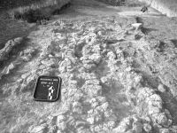 Cronica Cercetărilor Arheologice din România, Campania 2002. Raportul nr. 175, Scânteia, La Nuci (Dealul Bodeştilor)<br /><a href='http://foto.cimec.ro/cronica/2002/175/Scant1.jpg' target=_blank>Priveşte aceeaşi imagine într-o fereastră nouă</a>