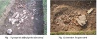 Chronicle of the Archaeological Excavations in Romania, 2002 Campaign. Report no. 192, Suplacu de Barcău, Corău ob. 3<br /><a href='http://foto.cimec.ro/cronica/2002/192/suplacfig11-12-doc-1.jpg' target=_blank>Display the same picture in a new window</a>