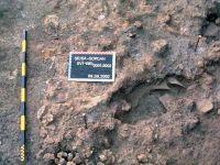Cronica Cercetărilor Arheologice din România, Campania 2002. Raportul nr. 196, Şeuşa, Gorgan<br /><a href='http://foto.cimec.ro/cronica/2002/196/05.jpg' target=_blank>Priveşte aceeaşi imagine într-o fereastră nouă</a>