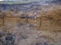 Chronicle of the Archaeological Excavations in Romania, 2003 Campaign. Report no. 128, Murighiol, La Cetate (Bataraia)<br /><a href='http://foto.cimec.ro/cronica/2003/128/murighiol-halmyris-lutaria-2.jpg' target=_blank>Display the same picture in a new window</a>
