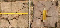 Cronica Cercetărilor Arheologice din România, Campania 2003. Raportul nr. 154, Răcarii De Jos<br /><a href='http://foto.cimec.ro/cronica/2003/154/racari-fig-08-teg-mam.jpg' target=_blank>Priveşte aceeaşi imagine într-o fereastră nouă</a>