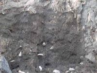 Chronicle of the Archaeological Excavations in Romania, 2003 Campaign. Report no. 207, Vaslui<br /><a href='http://foto.cimec.ro/cronica/2003/207/vaslui-curtile-domnesti-007.jpg' target=_blank>Display the same picture in a new window</a>