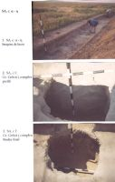 Chronicle of the Archaeological Excavations in Romania, 2003 Campaign. Report no. 211, Vlădeni, Popina Blagodeasca<br /><a href='http://foto.cimec.ro/cronica/2003/211/vladeni-popina-blagodeasca-pl-viii.jpg' target=_blank>Display the same picture in a new window</a>