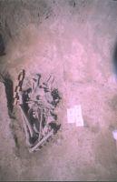 Cronica Cercetărilor Arheologice din România, Campania 2004. Raportul nr. 211, Stelnica, Grădiştea Mare<br /><a href='http://foto.cimec.ro/cronica/2004/211/rsz-1.jpg' target=_blank>Priveşte aceeaşi imagine într-o fereastră nouă</a>