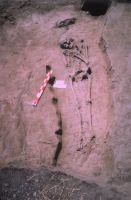 Cronica Cercetărilor Arheologice din România, Campania 2004. Raportul nr. 211, Stelnica, Grădiştea Mare<br /><a href='http://foto.cimec.ro/cronica/2004/211/rsz-4.jpg' target=_blank>Priveşte aceeaşi imagine într-o fereastră nouă</a>