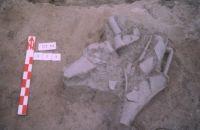 Cronica Cercetărilor Arheologice din România, Campania 2004. Raportul nr. 211, Stelnica, Grădiştea Mare<br /><a href='http://foto.cimec.ro/cronica/2004/211/rsz-7.jpg' target=_blank>Priveşte aceeaşi imagine într-o fereastră nouă</a>