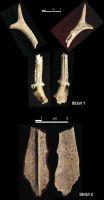 Cronica Cercetărilor Arheologice din România, Campania 2004. Raportul nr. 215, Şeuşa, Gorgan<br /><a href='http://foto.cimec.ro/cronica/2004/215/rsz-13.jpg' target=_blank>Priveşte aceeaşi imagine într-o fereastră nouă</a>