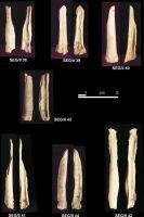 Cronica Cercetărilor Arheologice din România, Campania 2004. Raportul nr. 215, Şeuşa, Gorgan<br /><a href='http://foto.cimec.ro/cronica/2004/215/rsz-16.jpg' target=_blank>Priveşte aceeaşi imagine într-o fereastră nouă</a>