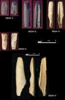 Cronica Cercetărilor Arheologice din România, Campania 2004. Raportul nr. 215, Şeuşa, Gorgan<br /><a href='http://foto.cimec.ro/cronica/2004/215/rsz-18.jpg' target=_blank>Priveşte aceeaşi imagine într-o fereastră nouă</a>