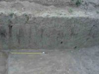 Chronicle of the Archaeological Excavations in Romania, 2004 Campaign. Report no. 238, Vaslui<br /><a href='http://foto.cimec.ro/cronica/2004/238/rsz-12.jpg' target=_blank>Display the same picture in a new window</a>