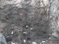 Chronicle of the Archaeological Excavations in Romania, 2004 Campaign. Report no. 238, Vaslui<br /><a href='http://foto.cimec.ro/cronica/2004/238/rsz-18.jpg' target=_blank>Display the same picture in a new window</a>