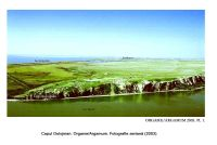 Chronicle of the Archaeological Excavations in Romania, 2005 Campaign. Report no. 101, Jurilovca, Capul Dolojman.<br /> Sector 02-poze-sector central.<br /><a href='http://foto.cimec.ro/cronica/2005/101/rsz-0.jpg' target=_blank>Display the same picture in a new window</a>