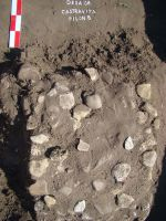 Chronicle of the Archaeological Excavations in Romania, 2008 Campaign. Report no. 26, Desa, La ruptură<br /><a href='http://foto.cimec.ro/cronica/2008/026/DSC03983.JPG' target=_blank>Display the same picture in a new window</a>