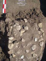 Cronica Cercetărilor Arheologice din România, Campania 2008. Raportul nr. 26, Desa, Castraviţa<br /><a href='http://foto.cimec.ro/cronica/2008/026/DSC03983.JPG' target=_blank>Priveşte aceeaşi imagine într-o fereastră nouă</a>