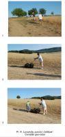 Cronica Cercetărilor Arheologice din România, Campania 2008. Raportul nr. 43, Luncaviţa, Cetăţuia<br /><a href='http://foto.cimec.ro/cronica/2008/043/pl-iv-cercetari-geo-radar.jpg' target=_blank>Priveşte aceeaşi imagine într-o fereastră nouă</a>