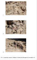 Cronica Cercetărilor Arheologice din România, Campania 2008. Raportul nr. 43, Luncaviţa, Cetăţuia<br /><a href='http://foto.cimec.ro/cronica/2008/043/pl-v-nivelul-de-distrugere-al-locuintei-nr-8.jpg' target=_blank>Priveşte aceeaşi imagine într-o fereastră nouă</a>