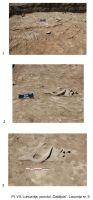 Cronica Cercetărilor Arheologice din România, Campania 2008. Raportul nr. 43, Luncaviţa, Cetăţuia<br /><a href='http://foto.cimec.ro/cronica/2008/043/pl-vii-locuinta-nr-9.jpg' target=_blank>Priveşte aceeaşi imagine într-o fereastră nouă</a>