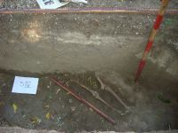 Chronicle of the Archaeological Excavations in Romania, 2008 Campaign. Report no. 148, Focşani, Grădina Publică<br /><a href='http://foto.cimec.ro/cronica/2008/148/img-0018.JPG' target=_blank>Display the same picture in a new window</a>