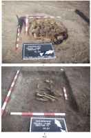 Chronicle of the Archaeological Excavations in Romania, 2008 Campaign. Report no. 150, Gheorghieni, Valea Mare<br /><a href='http://foto.cimec.ro/cronica/2008/150/pl-1.jpg' target=_blank>Display the same picture in a new window</a>