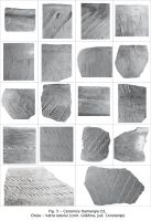 Chronicle of the Archaeological Excavations in Romania, 2009 Campaign. Report no. 15, Cheia, Vatra satului.<br /> Sector ILUSTRATIE-CHEIA-2017.<br /><a href='http://foto.cimec.ro/cronica/2009/sistematice/015/5-Ceramica-Hamangia-III.jpg' target=_blank>Display the same picture in a new window</a>