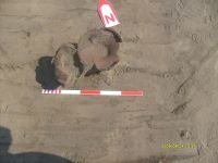 Chronicle of the Archaeological Excavations in Romania, 2009 Campaign. Report no. 19, Desa, La ruptură<br /><a href='http://foto.cimec.ro/cronica/2009/sistematice/019/DESA-DJ-13.JPG' target=_blank>Display the same picture in a new window</a>