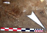Cronica Cercetărilor Arheologice din România, Campania 2009. Raportul nr. 72, Sultana, Malu Roşu<br /><a href='http://foto.cimec.ro/cronica/2009/sistematice/072/5-Bucata-de-lemn-mineralizat-C272009.JPG' target=_blank>Priveşte aceeaşi imagine într-o fereastră nouă</a>