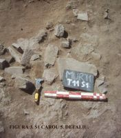 Chronicle of the Archaeological Excavations in Romania, 2011 Campaign. Report no. 45, Murighiol, La Cetate (Bataraia).<br /> Sector SECTOR TURNUL 11.<br /><a href='http://foto.cimec.ro/cronica/2011/045/SECTOR-TURNUL-11/figura-3-s1-carou-5-detaliu.jpg' target=_blank>Display the same picture in a new window</a>