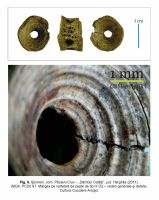 Chronicle of the Archaeological Excavations in Romania, 2011 Campaign. Report no. 77, Şoimeni, Várdomb (Ciomortan, Várdomb).<br /> Sector IMDA.<br /><a href='http://foto.cimec.ro/cronica/2011/077/IMDA/fig-6-beldiman-sztancs-soimeni-imda-cca2011.jpg' target=_blank>Display the same picture in a new window</a>