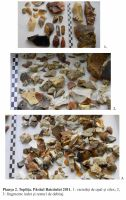Cronica Cercetărilor Arheologice din România, Campania 2011. Raportul nr. 153, Topliţa<br /><a href='http://foto.cimec.ro/cronica/2011/153/Plansa-2.jpg' target=_blank>Priveşte aceeaşi imagine într-o fereastră nouă</a>
