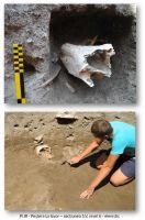 Cronica Cercetărilor Arheologice din România, Campania 2012. Raportul nr. 15, Cheia, Pazvant III.<br /> Sectorul ILUSTRATIE-CHEIA-2017.<br /><a href='http://foto.cimec.ro/cronica/2012/015-CHEIA-CT/cheia-pl-1-5-page-3.jpg' target=_blank>Priveşte aceeaşi imagine într-o fereastră nouă</a>