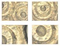 Cronica Cercetărilor Arheologice din România, Campania 2012. Raportul nr. 28, Isaccea, La Pontonul Vechi (Cetate, Eski-kale).<br /> Sectorul planse IMDA.<br /><a href='http://foto.cimec.ro/cronica/2012/028-ISACCEA-TL-Noviodunum/planse-IMDA/fig-11.JPG' target=_blank>Priveşte aceeaşi imagine într-o fereastră nouă</a>