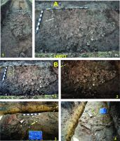 Chronicle of the Archaeological Excavations in Romania, 2014 Campaign. Report no. 117, Costeşti, Cier (Lângă Şcoală)<br /><a href='http://foto.cimec.ro/cronica/2014/117-Costesti/costesti-014-fig-5.jpg' target=_blank>Display the same picture in a new window</a>