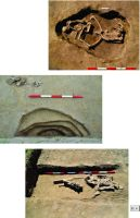 Chronicle of the Archaeological Excavations in Romania, 2014 Campaign. Report no. 124, Isaccea, La Pontonul Vechi (Cetate, Eski-kale).<br /> Sector planse IMDA.<br /><a href='http://foto.cimec.ro/cronica/2014/124-Isaccea/pl-4-tpf.jpg' target=_blank>Display the same picture in a new window</a>