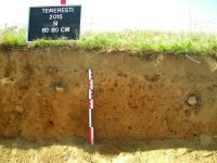 Chronicle of the Archaeological Excavations in Romania, 2015 Campaign. Report no. 110, Temereşti, Dealul Vinii<br /><a href='http://foto.cimec.ro/cronica/2015/110-Temeresti/fig2.JPG' target=_blank>Display the same picture in a new window</a>
