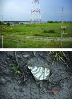 Chronicle of the Archaeological Excavations in Romania, 2017 Campaign. Report no. 27, Isaccea, La Pontonul Vechi (Cetate, Eski-kale).<br /> Sector planse-IMDA.<br /><a href='http://foto.cimec.ro/cronica/2017/01-Cercetari-sistematice/027-Curtina-i/pl-5.jpg' target=_blank>Display the same picture in a new window</a>