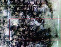 Chronicle of the Archaeological Excavations in Romania, 2018 Campaign. Report no. 27, Jurilovca, Platforma continentală a litoralului românesc al Mării Negre<br /><a href='http://foto.cimec.ro/cronica/2018/1-sistematice/027-GuraPortitei-epava-rusu-TL-s/fig-1.jpg' target=_blank>Display the same picture in a new window</a>