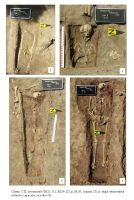 Chronicle of the Archaeological Excavations in Romania, 2018 Campaign. Report no. 105, Coşoteni<br /><a href='http://foto.cimec.ro/cronica/2018/2-preventive/105-Cososteni-TR-p/plansa-06.JPG' target=_blank>Display the same picture in a new window</a>