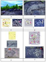 Chronicle of the Archaeological Excavations in Romania, 2019 Campaign. Report no. 71, Siliştea, Pe Cetăţuie.<br /> Sector imaginisilistea-pe-cetatuie-bolohan.<br /><a href='http://foto.cimec.ro/cronica/2019/01-sistematice/071-silistea-nt-pecetatuie-s/imaginisilistea-pe-cetatuie-bolohan/fig-2.jpg' target=_blank>Display the same picture in a new window</a>